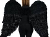 asas-de-anjo-01