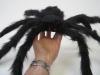 bichos-aranha-veludo-grande